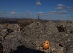 Edward Egg